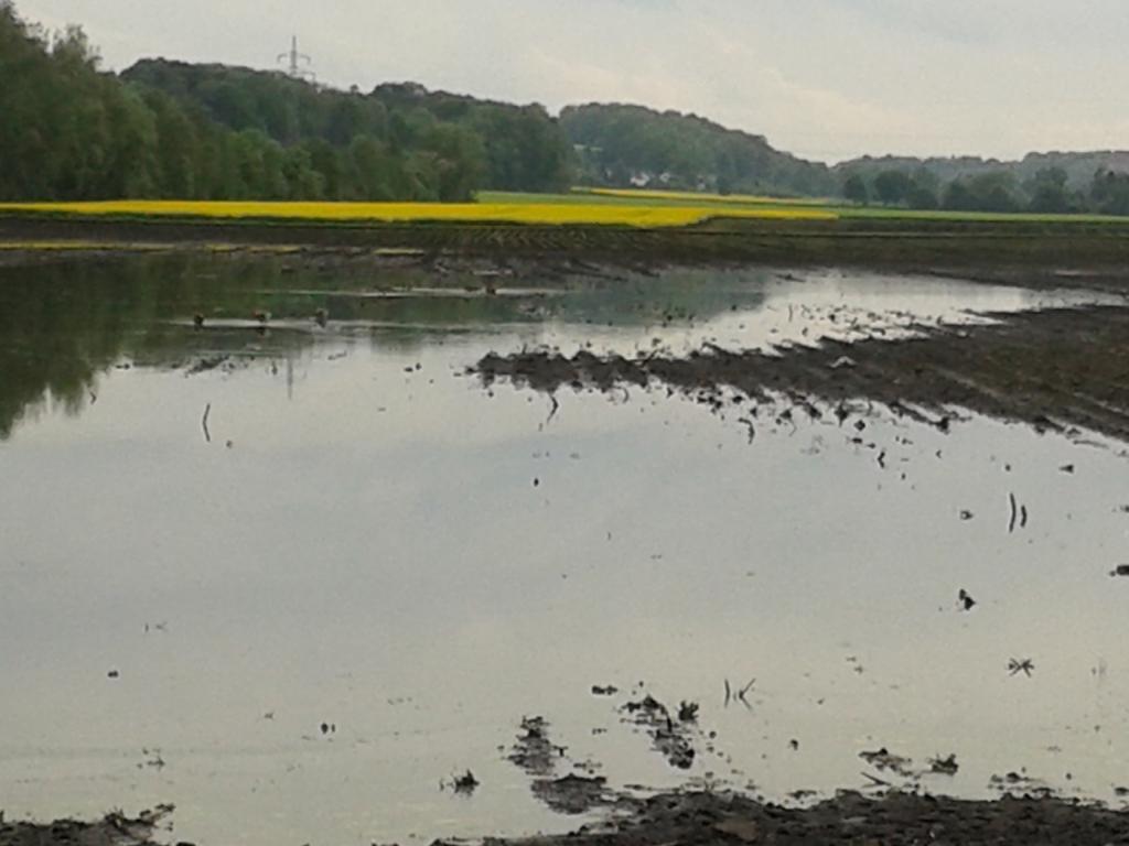 Hochwasser im Risstal Mai 2015